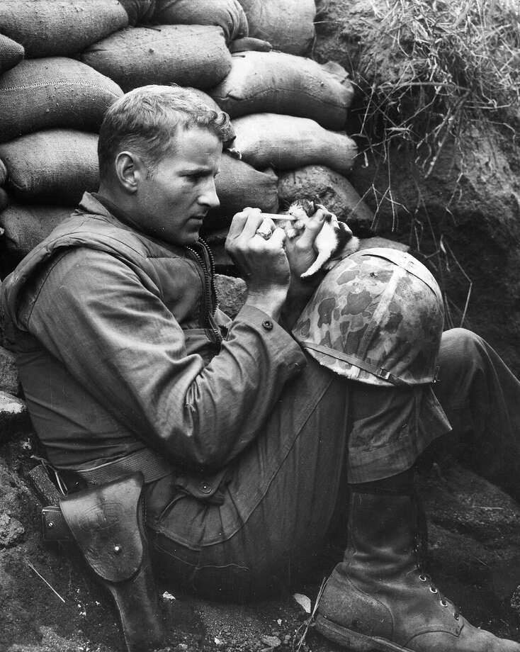 A US Marine feeds an orphan kitten found after a heavy mortar barrage near 'Bunker Hill' during the Korean War. Photo: Sgt Martin Riley, Getty Images / Hulton Archive