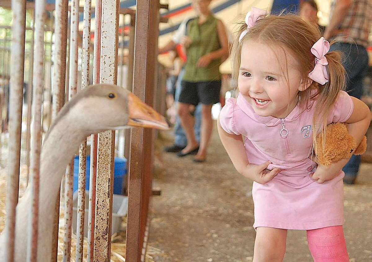 Silly goose! Three-year-old Catherine Smedley cracks up as a goose squawks at her at the Shelby County Fair in Sidney, Ohio.