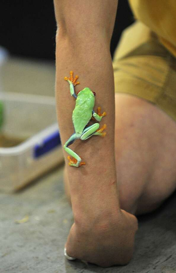 Climb every appendage: Suction-cup fingers enable a red eye tree frog to scale the arm of Animal Embassy specialist Robin Minerd during an educational program at the Stamford Museum and Nature Center in Stamford, Conn. Photo: Jason Rearick, Connecticut Post