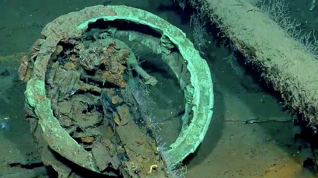 Items and sea life found in a Gulf shipwreck being explored by Texas A&M University at Galveston research scientists and National Oceanic and Atmospheric Administration experts. (Texas A&M photo)