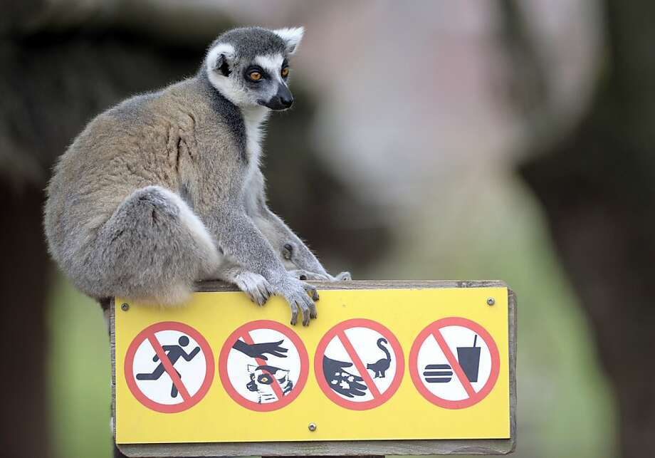 What I wouldn't do for some Orville Redenbacher: At the Sainte-Croix Zoo in 