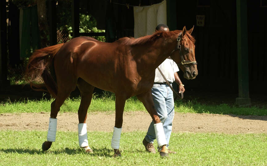 Kentucky Derby and Preakness winner Funny Cide gets some fresh air out of his stall at the Saratoga