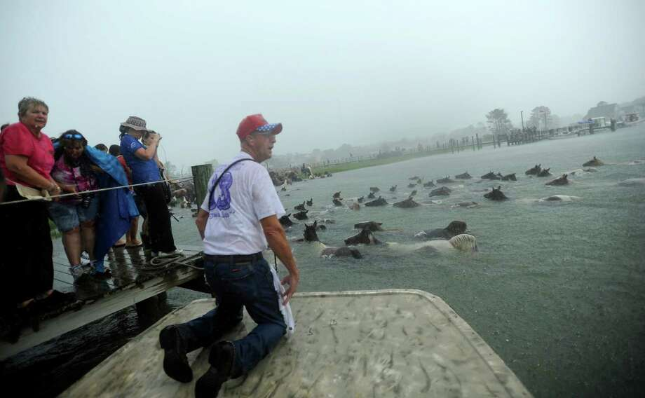 Saltwater Cowboy John Wesley Bloxom watches the remaining members of the Chincoteague Pony herd finish their swim across Assateague Channel in a heavy downpour on Wednesday, July 24, 2013 during the 88th Annual Chincoteague Pony Swim. Photo: Jay Diem, Associated Press / Eastern Shore News