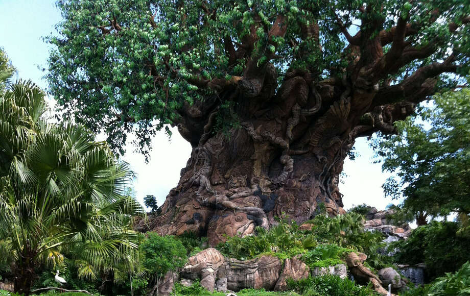 Hundreds of animals are sculpted into the trunk and branches of the 145-foot-tall Tree of Life at Disney's Animal Kingdom. Photo: Photos By Chantay L. Warren / San Antonio Express-News