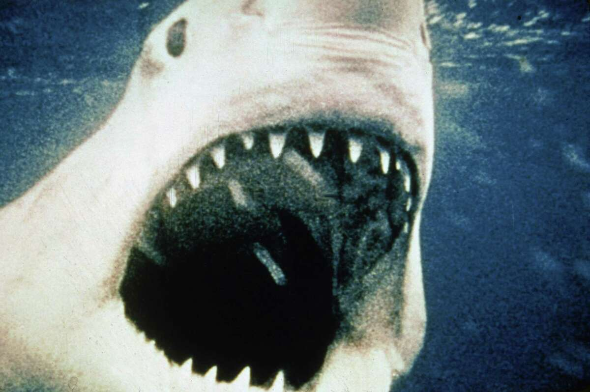 The great white shark which gave the 1975 movie