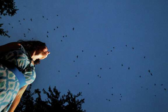 Ecologist Cullen Geiselman looks at Mexican Free-Tailed bats as they fly near the Waugh Street bridge, Saturday, July 13, 2013, in Houston. The bats search for food at night and can travel at distances more than 30 miles to forage. (Cody Duty / Houston Chronicle)