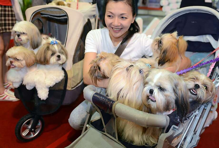Remember when strollers were strictly for humans?No need to walk the dog when they can ride in comfort at a pet show in Taipei. Photo: Sam Yeh, AFP/Getty Images