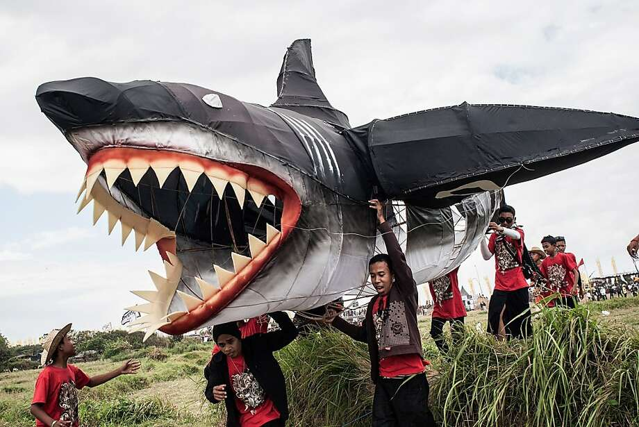 Shark pray:In Denpasar, Bali, Hindu worshippers fly a great white kite intended as a message to the gods to deliver an abundant harvest. Photo: Putu Sayoga, Getty Images
