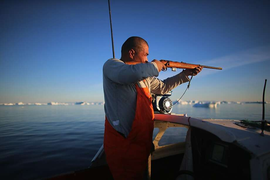 Hunting and fishing simultaneously: Inunnguaq Petersen shoots at a seal as he waits for fish to hit his line near icebergs that broke off from the Jakobshavn Glacier in Ilulissat, Greenland. Photo: Joe Raedle, Getty Images