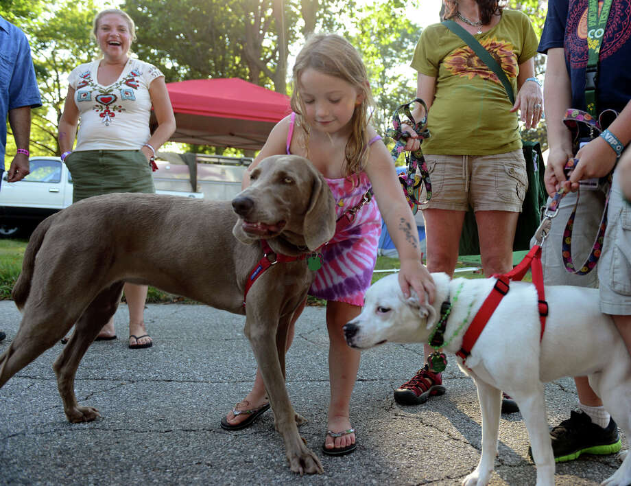 Lily Curtain, 6, of Bridgeport, pets dogs Lily and  Kaia, right, while at 18th Annual Gathering of the Vibes music festival at Seaside Park in Bridgeport, Conn. on Friday July 26, 2013. Photo: Christian Abraham / Connecticut Post freelance