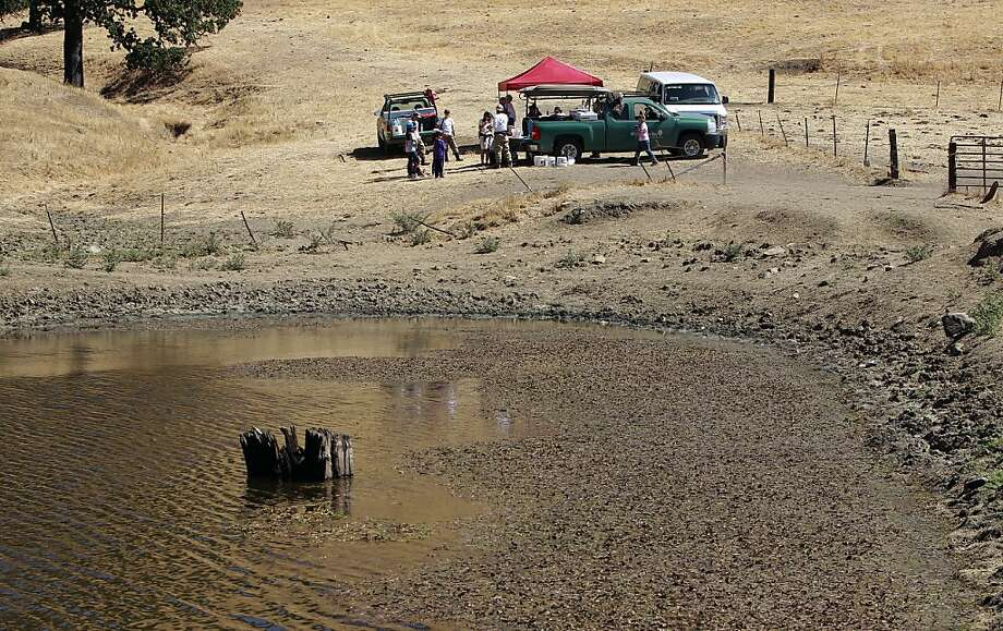 "The team sets up next to a cattle pond outside Clayton where the western pond turtles live: ""This is the holy grail for turtles,"" said David ""Doc Quack"" Riensche. Photo: Michael Macor, San Francisco Chronicle"