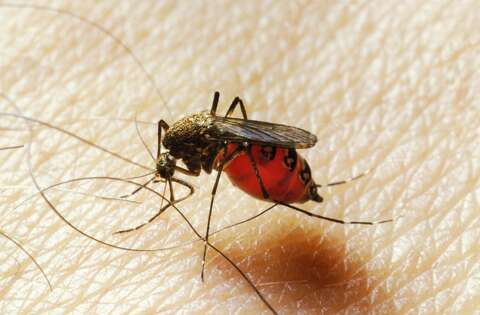 Why Google is killing off Fresno's mosquitoes - SFGate