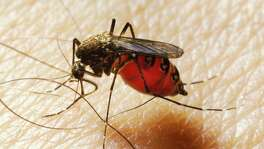 People with Type O blood  Congratulations, universal donors! You are universally more likely to donate to mosquitoes.