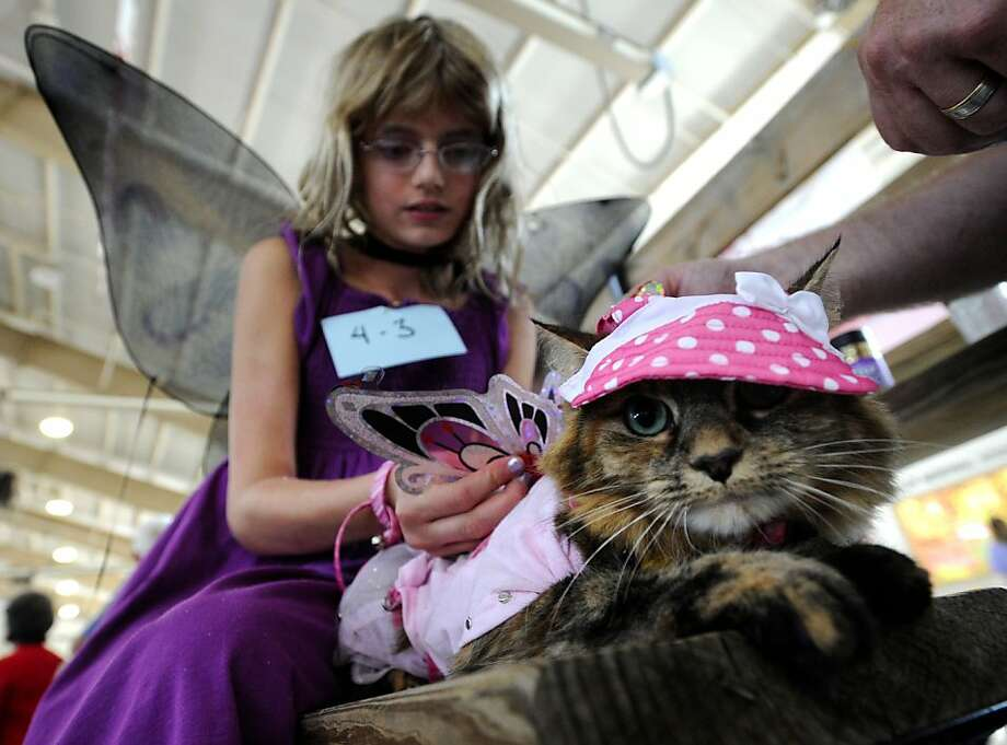 Hang in there, Sneakers. It will all be over soon: Ten-year-old Jacquelyn Slade prepares her cat