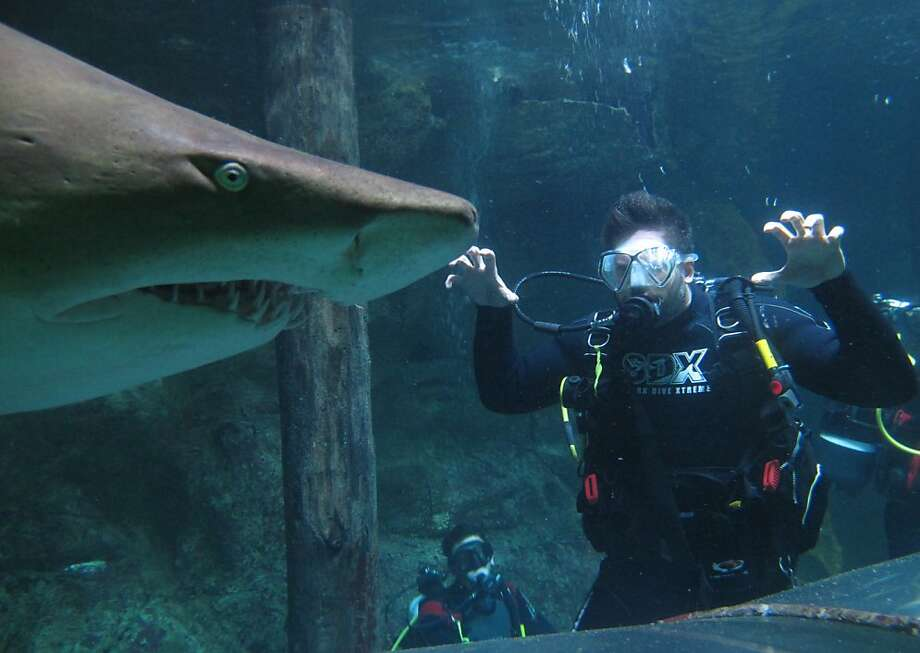 "Boo! Joe Manganiello, who plays a werewolf in HBO's ""True Blood"" series, tries to scare a harmless nurse shark in the Manly SEA LIFE Sanctuary in Sydney. Photo: Manly SEA LIFE Sanctuary, Getty Images"