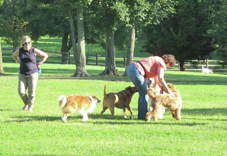 Kathy Horn attempts to corral her dogs, Morgan and Sadie. Spencer's Run recently had a keyless lock system installed to bring order to the dog park. July 30, 2013, New Canaan, Conn. Photo: Tyler Woods
