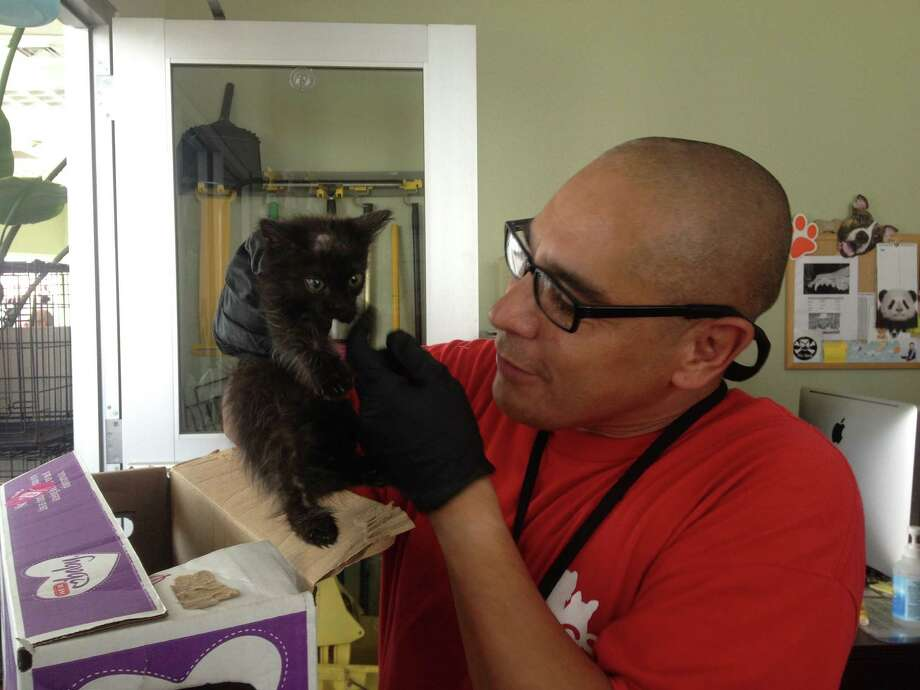 In the intake room at ACS, kennel worker Robert Trevino checks out a new kitten. Photo: Sarah Tressler/San Antonio Express-News
