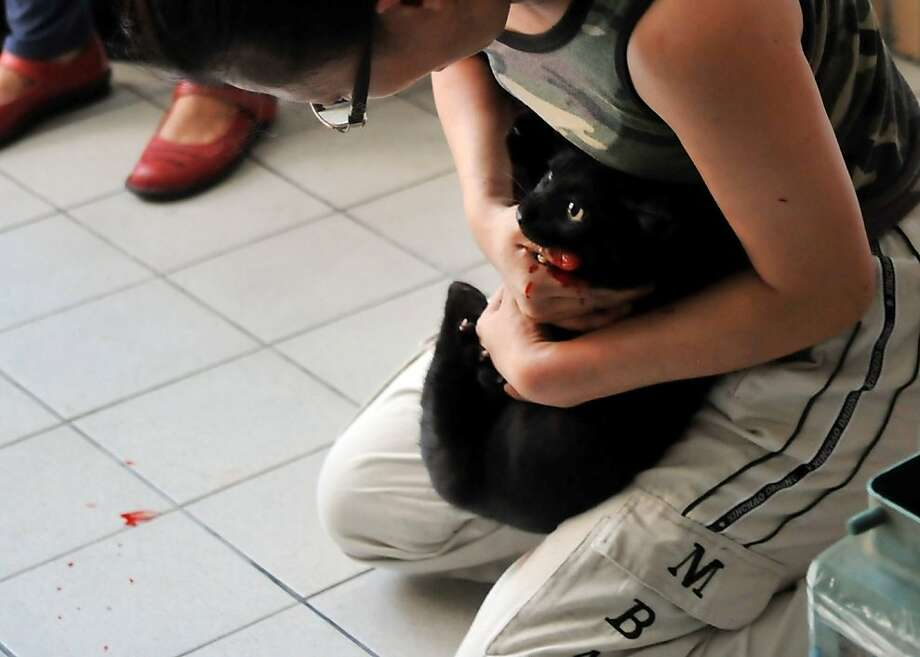 I can't believe you let them do that to me: A pet owner steadies her cat after the feline bit her while getting a rabies shot at a clinic in New Taipei City. Taiwan called on citizens to vaccinate their pets against the deadly disease after several recent outbreaks. Photo: Mandy Cheng, AFP/Getty Images