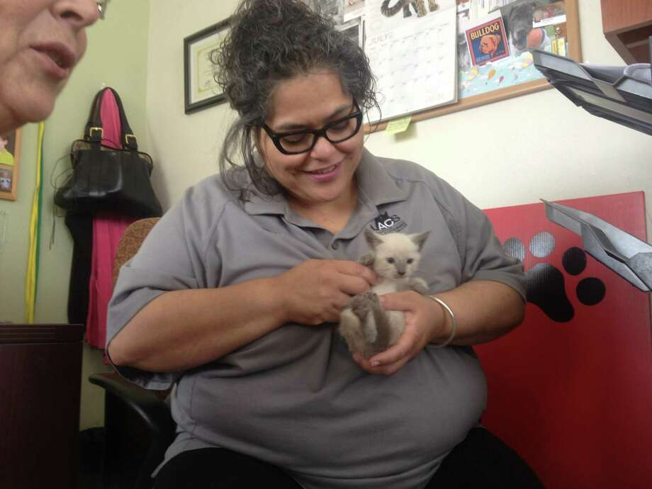 Perla Guzman cradles a kitten brought into ACS Tuesday. Photo: Sarah Tressler/San Antonio Express-News