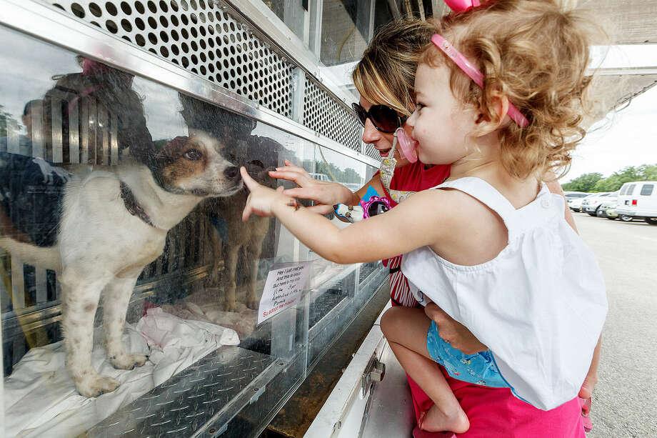 Ashley Zimmerman and Kyra, 2, meet Vita, a 3-year-old Australian cattle mix female. Photo: Marvin Pfeiffer / San Antonio Express-News