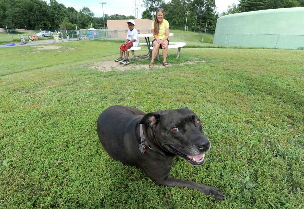 Stormy takes a break after running about at the Town of Bethlehem dog park on Wednesday July 31, 2013 in Bethlehem, N.Y. (Michael P. Farrell/Times Union)