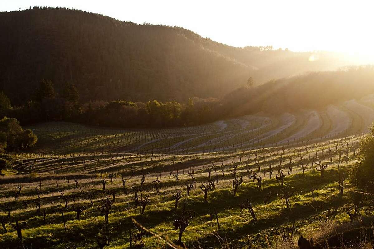 Vines at Mayacamas Vineyards on Mount Veeder.