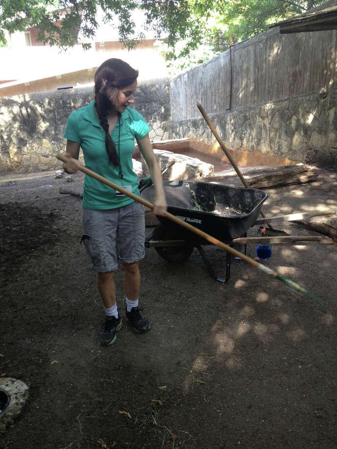 Reporter Sarah Tressler helps clean the babirusa enclosure at the San Antonio Zoo. Photo: Sarah Tressler/San Antonio Express-News