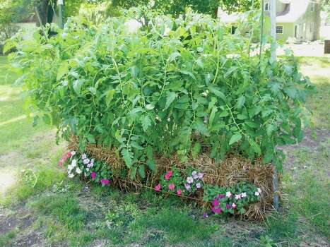 No room for a traditional garden no problem houston chronicle for Straw bale gardening joel karsten