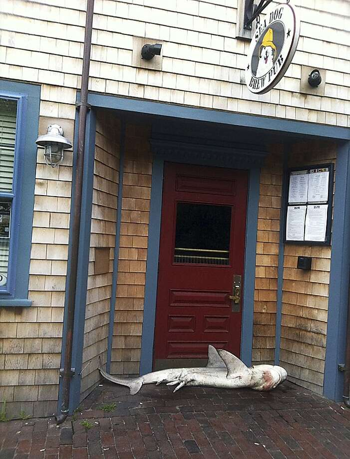 Land shark at the door: Despite no reports of sharknados in the area, a dead shark was found in the entrance of the Sea Dog Brew Pub in Nantucket, Mass. No explanation for the fish was forthcoming. Photo: Jimmy Agnew, Associated Press