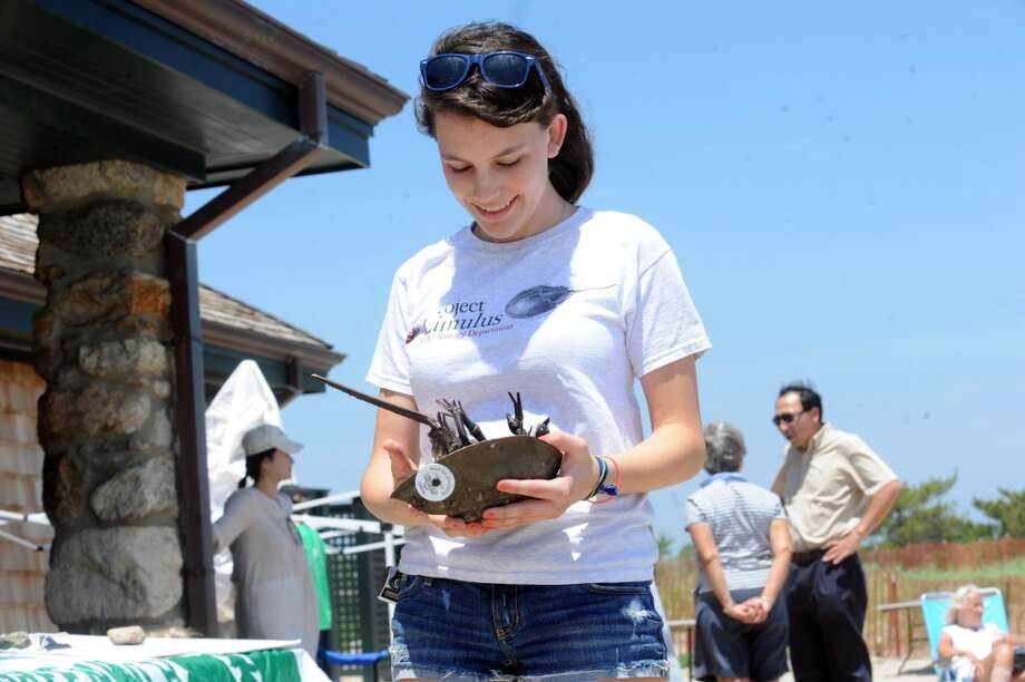 Jessie Vissicchio, 16, holds a crab during the Sound Experience, the Greenwich Shellfish Commission's annual event held earlier in June 2013 at the Bruce Museum's Seaside Center in the Floren Family Environmental Center. There will be a program there on Sunday, Aug. 4, 2013. Photo: Helen Neafsey