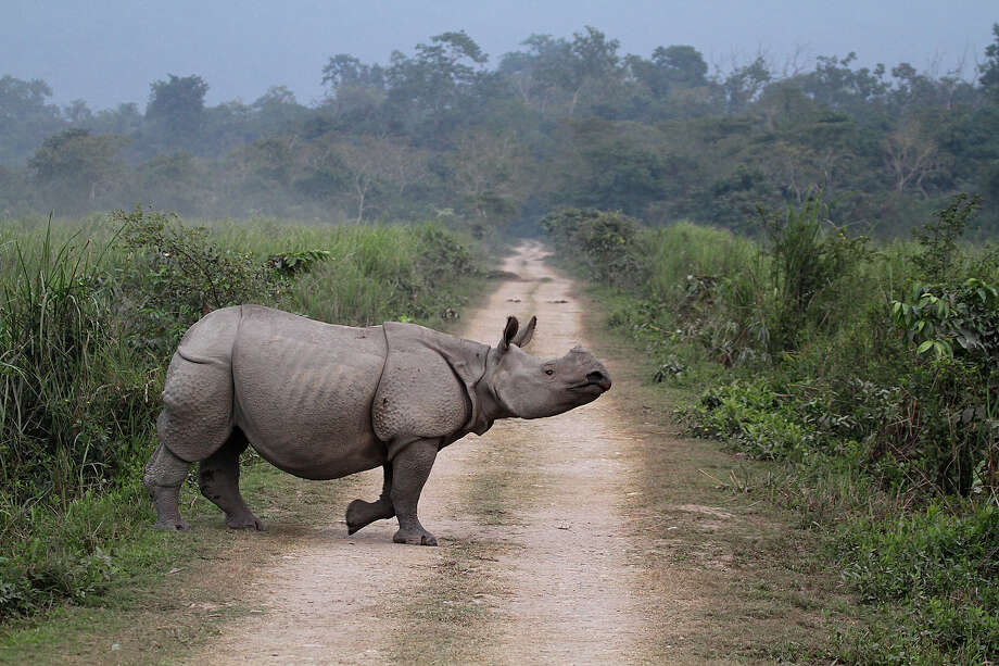 """India: Kaziranga National Park""""In the heart of Assam, this park is one of the last areas in eastern  India undisturbed by a human presence. It is inhabited by the world's  largest population of one-horned rhinoceroses, as well as many mammals,  including tigers, elephants, panthers and bears, and thousands of birds."""" — UNESCO Photo: Photograph By Arunsundar, Getty Images/Flickr Open / Flickr Open"""