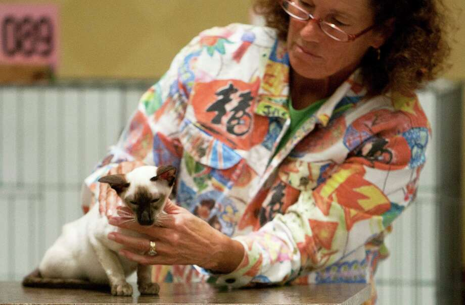 Mary Lou Anderson judges a Siamese the South Central Regional International Cat Show at the Houston Marriott North Saturday, Aug. 3, 2013, in Houston. Photo: James Nielsen, Houston Chronicle / © 2013  Houston Chronicle