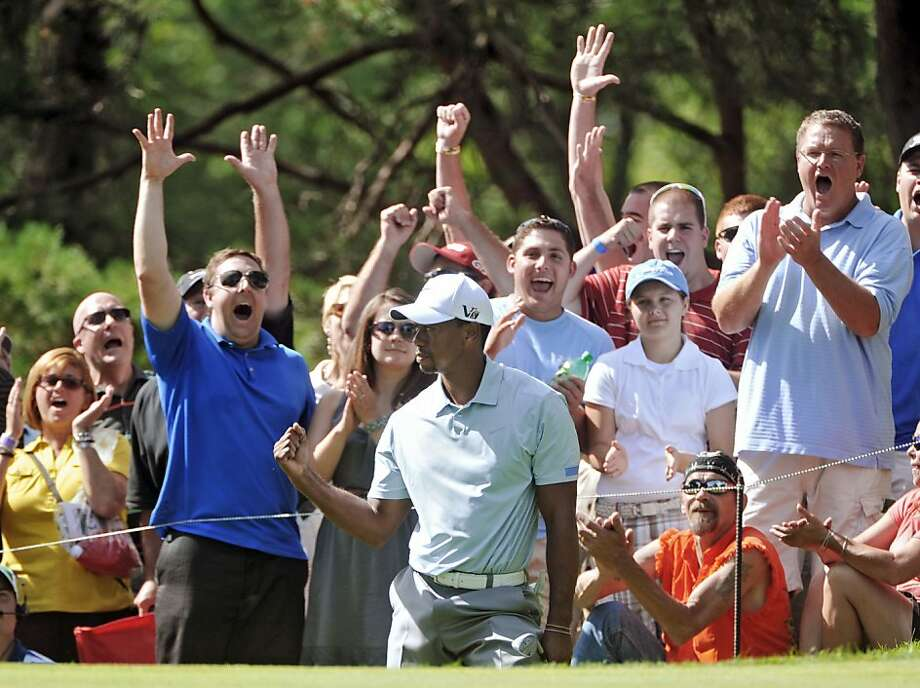 Fans cheer Tiger Woods after he chips in for a birdie on the 13th hole of the Firestone Country Club. Photo: Phil Long, Associated Press