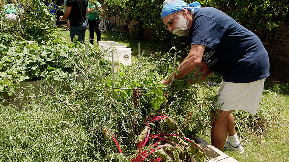 Inderpal Singh Gumer, 70, joined fellow Sikhs at Dodson Elementary to clean and care for the school's garden. Photo: Minh D. Dam / Houston Chronicle