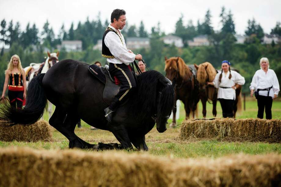 A rider from the Ma'Ceo Gypsy Horse Extravaganza presented by Cavallo Equestrian Arts wills his animal to the ground on its forelegs during The Washington Midsummer Renaissance Faire Saturday, August 3, 2013, at The Kelley Farm in Bonney Lake. The event continues August 10-11 and 17-18. Photo: JORDAN STEAD, SEATTLEPI.COM / SEATTLEPI.COM