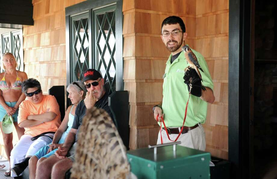 Derick Hips, lead educator, of New Canaan Nature Center, holds a American Kestrel during the Center's live bird show at the Innis Arden Cottage at Greenwich Point Park, in Greenwich, Conn., Sunday, August 4, 2013. Photo: Helen Neafsey / Greenwich Time