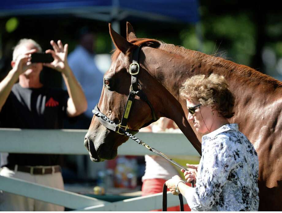Retired Kentucky Derby and Preakness winner and a New York Bred Funnycide is paraded around the paddock of the Saratoga Race Course  Aug. 4, 2013 by his former assistant trainer Robin Smullen in Saratoga Springs, N.Y.  Funnycide's return to the track was part of the 150th Celebration festivities.  (Skip Dickstein/Times Union) Photo: SKIP DICKSTEIN