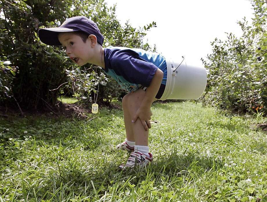 A blueberry-picking expeditiongoes awry near LaPorte, Ind. Photo: Bob Wellinski, Associated Press