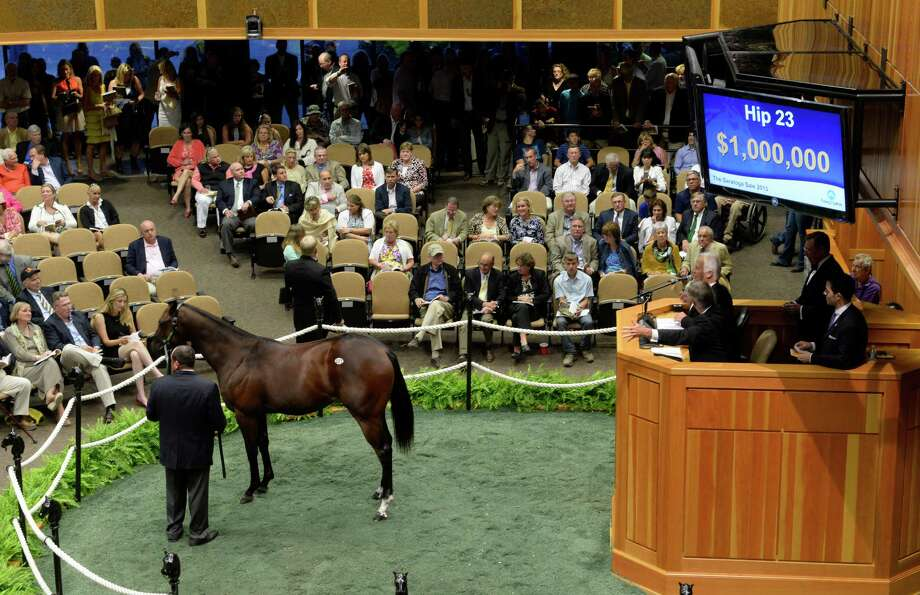 A Distorted Humor filly brought $1,000,000 in the first evening of the Fasig Tipton Yearling Sales Aug 5, 2013 in Saratoga Springs, N.Y.     (Skip Dickstein/Times Union) Photo: SKIP DICKSTEIN