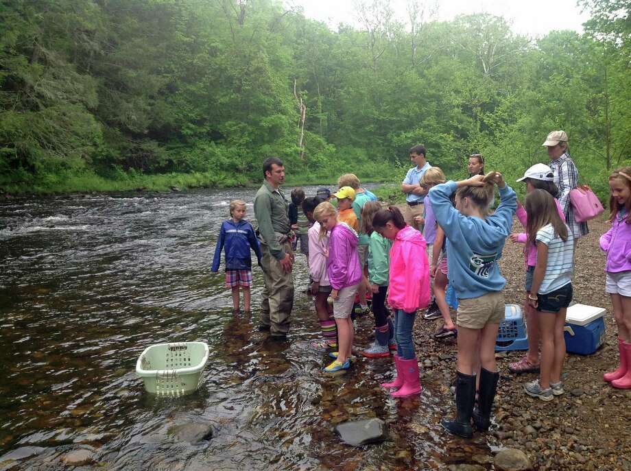 New Canaan Country School fourth graders participated in a statewide environmental conservation effort to repopulate Atlantic salmon in the Connecticut River. Above, students release baby salmon in to the Salmon River in East Hampton, Conn. Photo: Contributed Photo