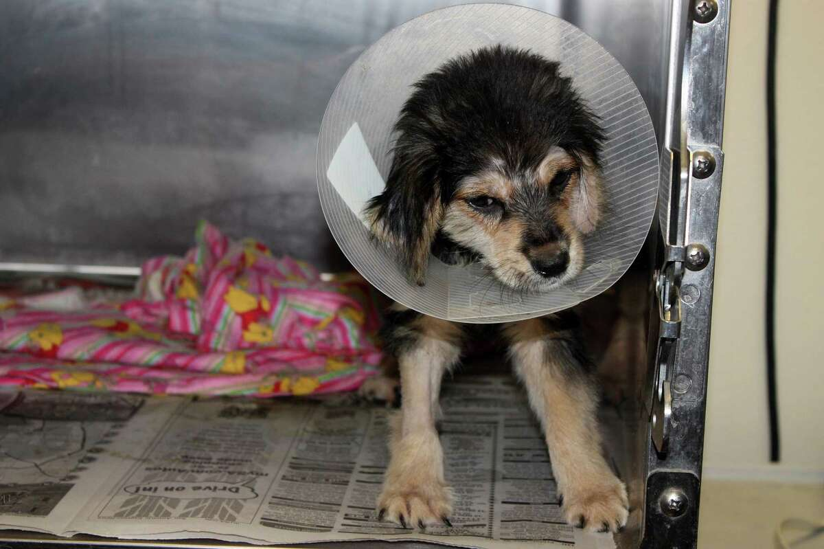 Lily, a 2-month-old German Shepherd mix, was rescued after a man used a fence post to beat her, breaking her jaw and incurring head injuries.