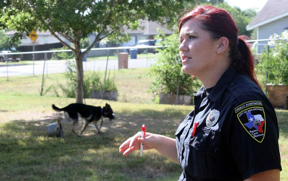 Animal Cruelty Specialist Audra Houghton informs the owners of this German Shepherd, which has been chained to a tree in their yard, that water and shelter need to be available to the dog at all times, and that once she goes into heat, city ordinances stipulate that she can't be chained to a tree at all. Photo: Sarah Tressler