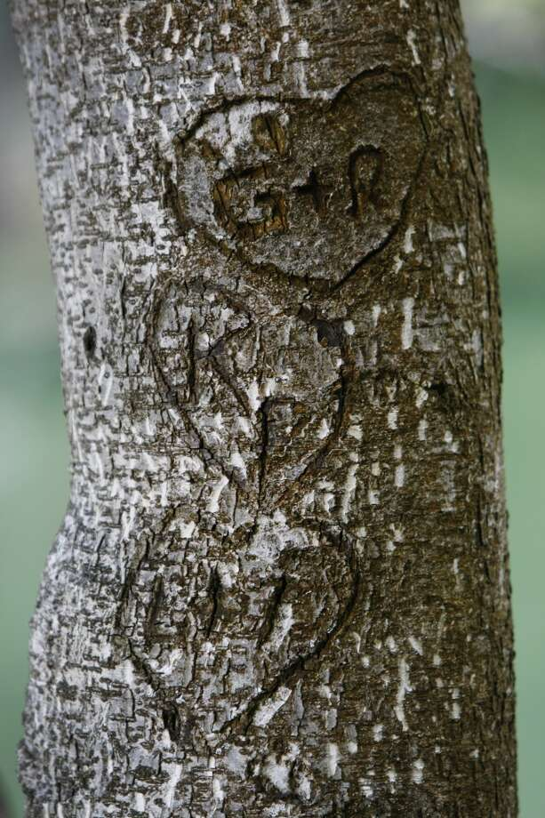 Carvings are seen on a tree at Stow Lake near Strawberry Hill on July 31, 2013 in San Francisco, Calif. Photo: The Chronicle