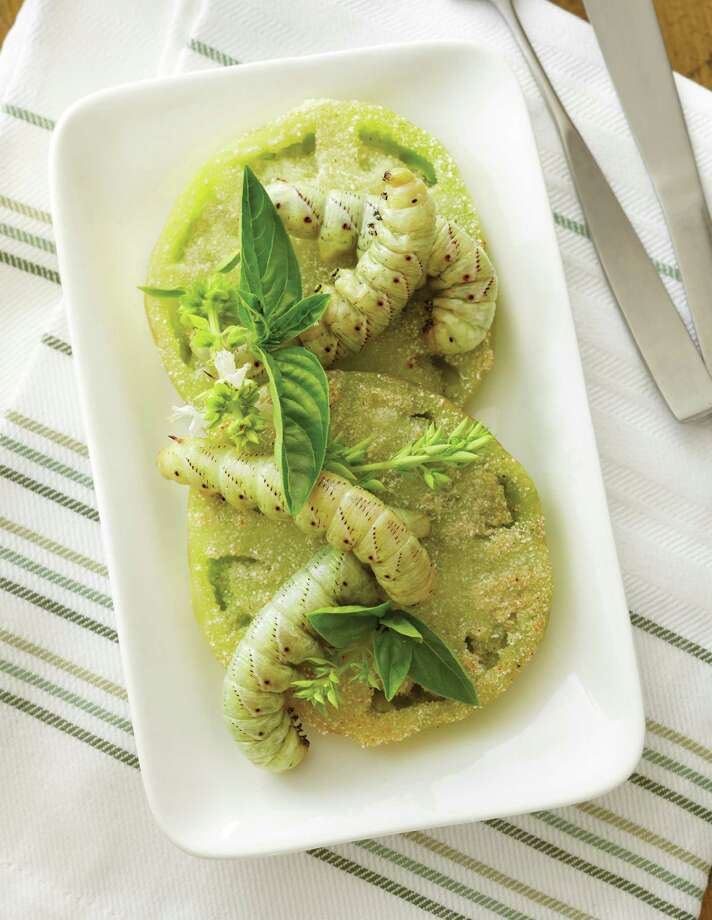 """Fried Green Tomato Hornworms,"" from ""The Eat-a-Bug Cookbook"" 32 tomato hornworms 4 medium green tomatoes, sliced into sixteen 1/4-inch rounds 3 tablespoons olive oilWhite cornmeal16 to 20 small basil leavesSalt and freshly ground pepperHeat 1 tablespoon oil over medium-high heat in a large skillet or wok. Add hornworms and fry lightly for about 4 minutes, taking care not to rupture the hornworms' cuticles under high heat. Remove with a slotted spoon. Set aside. Season tomato rounds with salt and pepper, then coat with cornmeal on both sides. In another large skillet or wok, heat remaining oil and fry tomatoes until lightly browned on both sides. Top each tomato round with two fried hornworms. Garnish with basil leaves and serve immediately.Yields 8 servingsRecipe and photo reprinted with permission from ""The Eat-a-Bug Cookbook"" by David George Gordon, Ten Speed Press, 2013.  Photo: -"