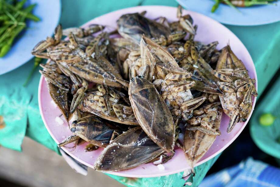 Giant water bugs, when fried, are also a hit in Thailand. Photo: Carl Pendle, - / (c) Carl Pendle
