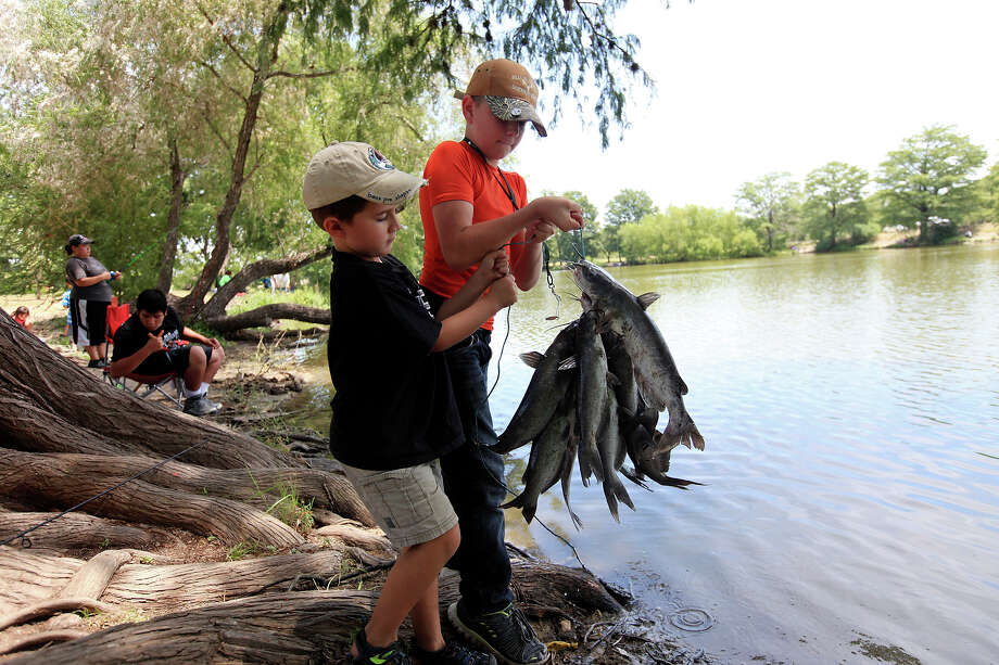 Tommy Driscoll, 5, (left) and Jacob Davis, 11, show catfish they caught Friday Aug. 2, 2013 at Southside Lions Park. Photo: Edward A. Ornelas, San Antonio Express-News / © 2013 San Antonio Express-News
