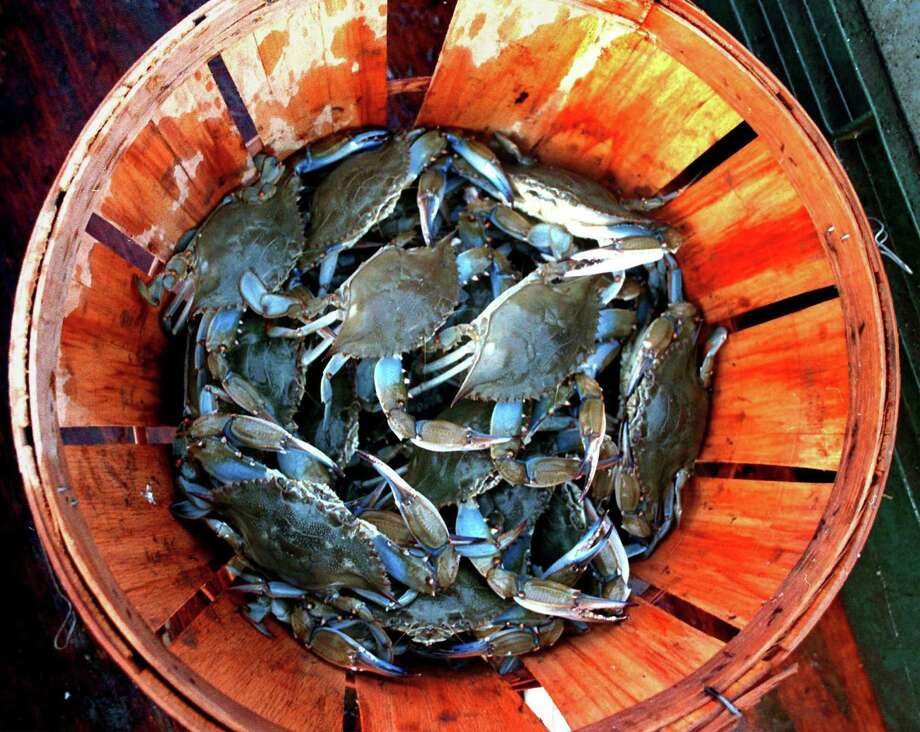 A summer day spent collecting a basket or ice chest of blue crabs is the way many Texans were introduced to their coastal bays. Photo: CHARLIE MEADS, MBR / VIRGINIA PILOT