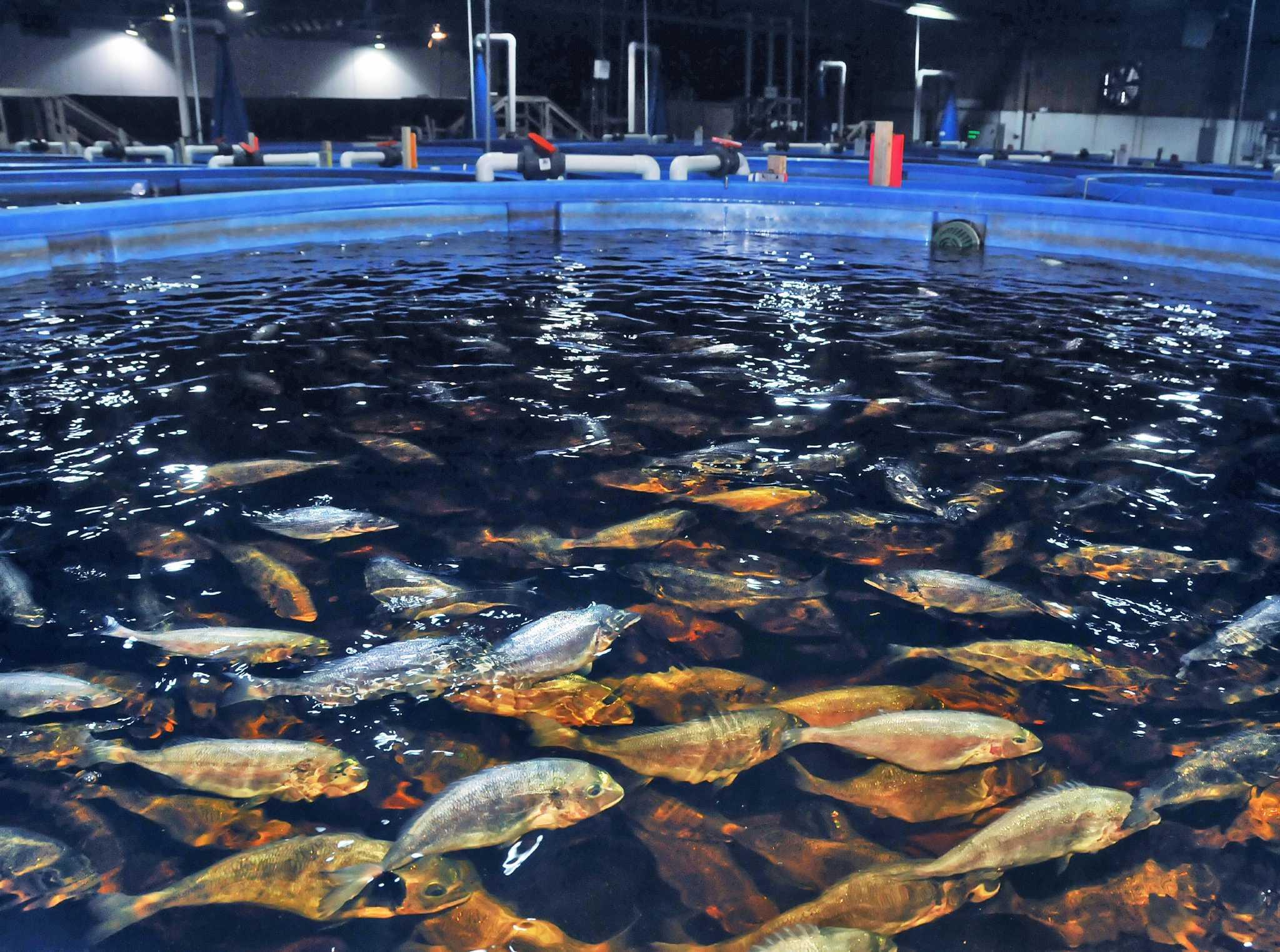 Ихтиология и рыбоводство картинки