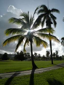 This photo was taken on one of the golf courses at Rio Mar Beach Resort, a Wyndham Grand Resort, in Rio Grande, Puerto Rico. The resort is along the north eastern part of the island with an amazingly beautiful view of the ocean.