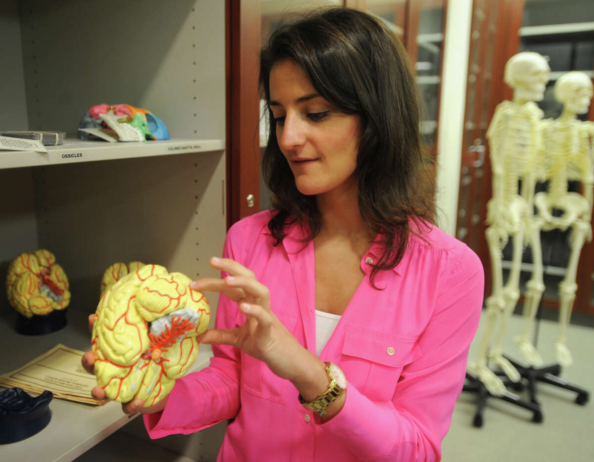 Incoming medical student Georgina Pappas, of Westport, looks at a model of the human brain at the new Quinnipiac University Frank H. Netter MD School of Medicine in North Haven, Conn., on Thursday, August 8, 2013.